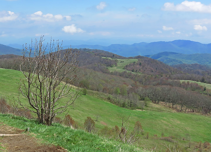 2012 Max Patch