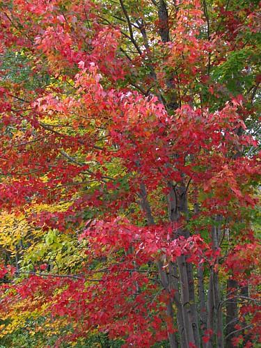 2009 White Mts Nh Fall Foliage