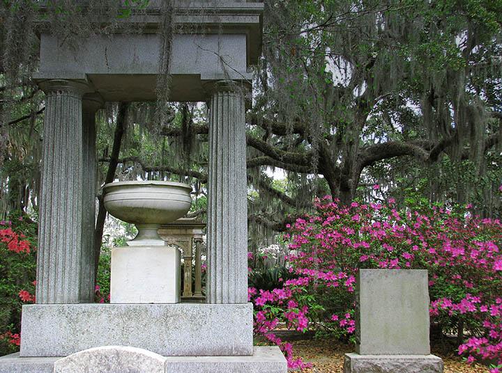 Savannah - Bonaventure